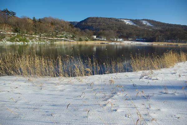 根雪になった大沼。ヨシの枯草が雪原に映える。 根雪になった大沼。ヨシの枯草が雪原に映える。 北東